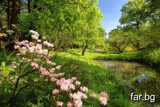 Красотата на зелената природа