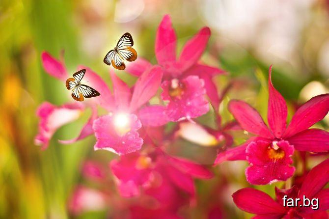 Най-добрият начин да бъдеш щастлив е просто да жив