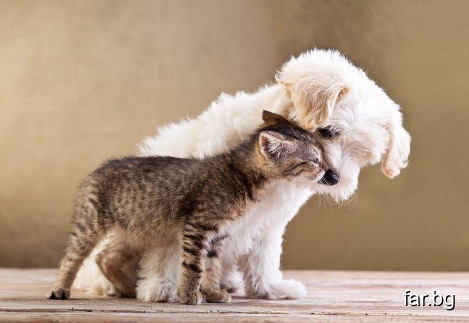 Като куче и котка