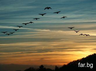 По добре е понякога да падаш, отколкото никога да
