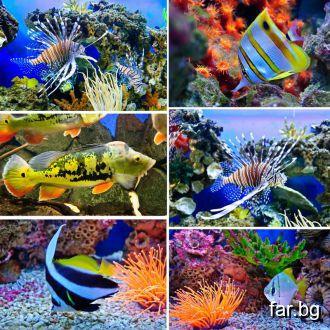Голямото изобилие на подводния свят