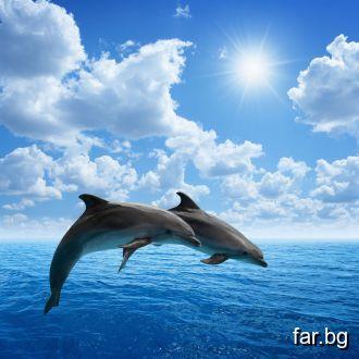 Играта на делфините