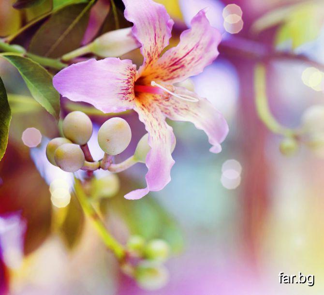 Красотата на цветята