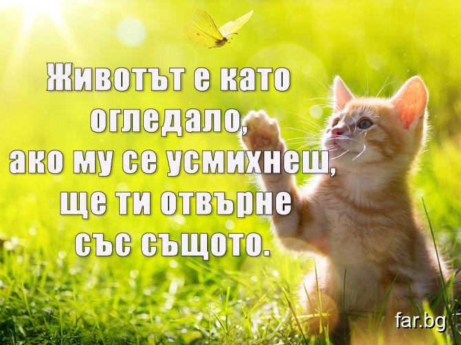 Животът е като огледало