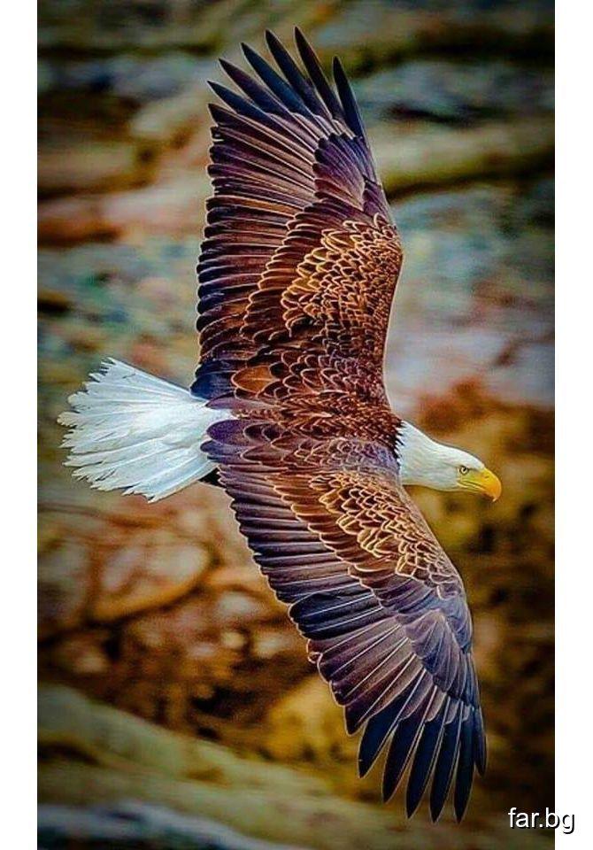 Чистото сърце е свободна птица