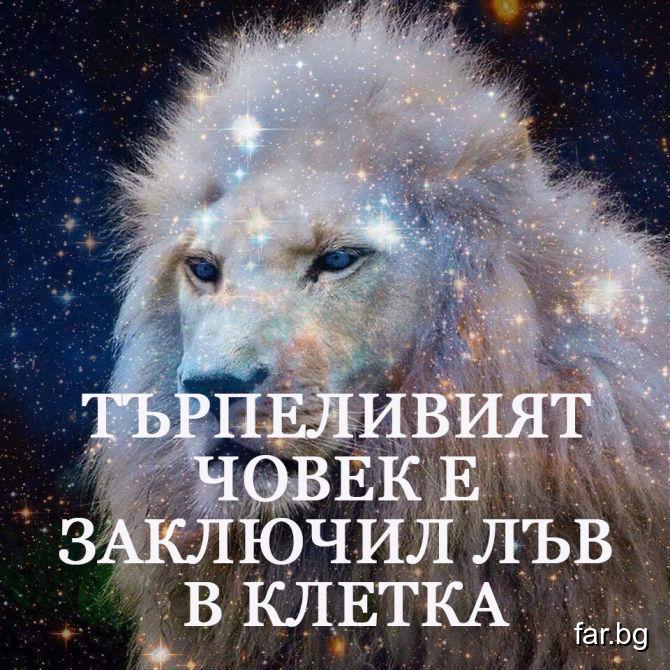 Търпеливият човек е заключил лъв в клетка
