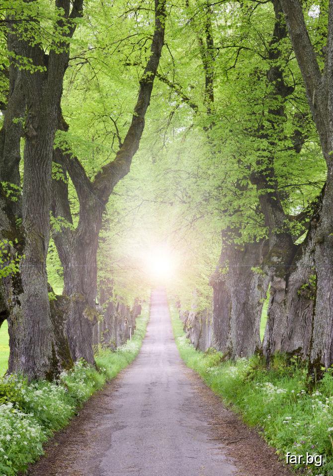 Човек трябва да се стреми към живот, към светлина,
