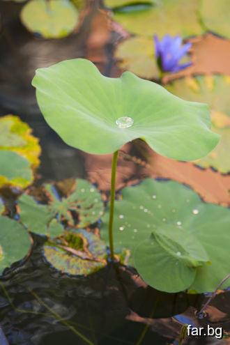 Смиреният, кроткият и светият живеят във вътрешна