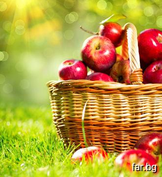 Човек, който носи Любов, е като един плод, най-хуб