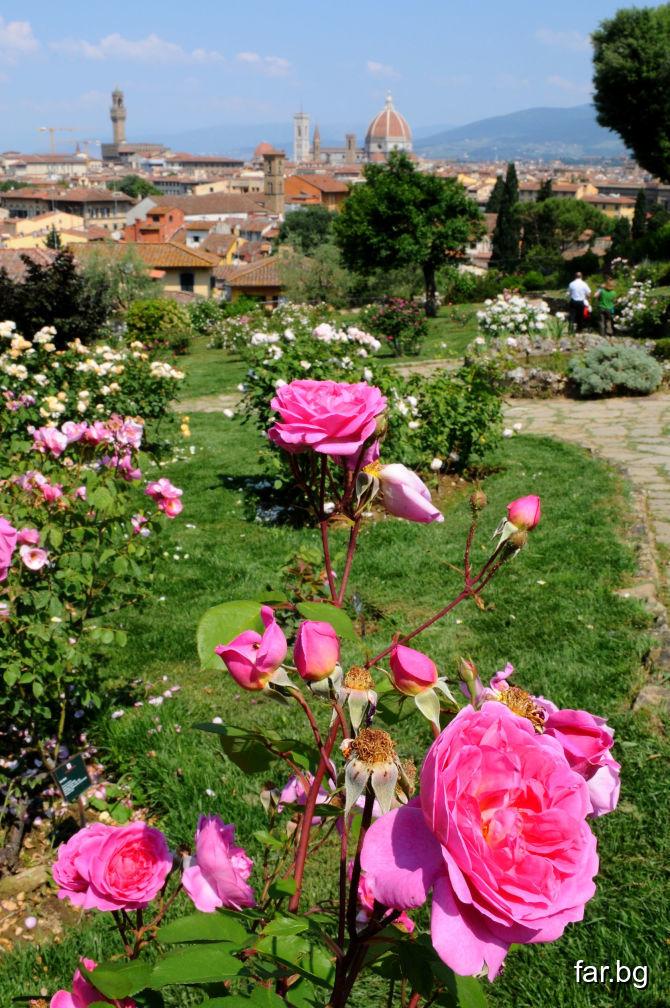 Приятната миризма на цветята е любовта, която те и