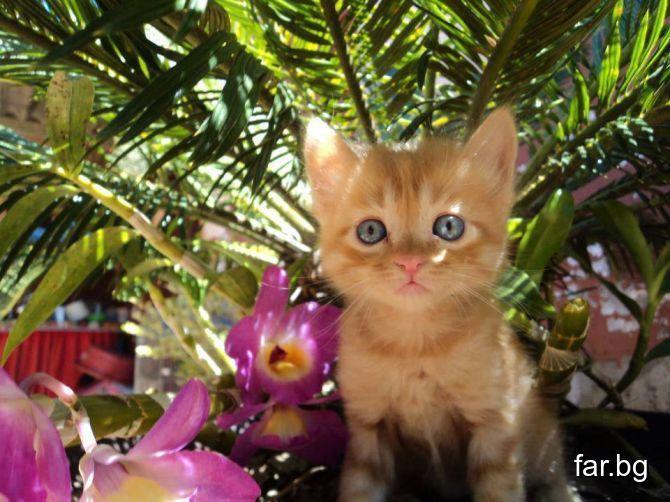 Обичай всяко дърво, всяко цвете и всяко животно ка