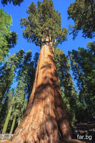 Като видите едно дърво, да гледате на него като на
