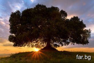 Там, дето си направил едно добро, то вече това дър