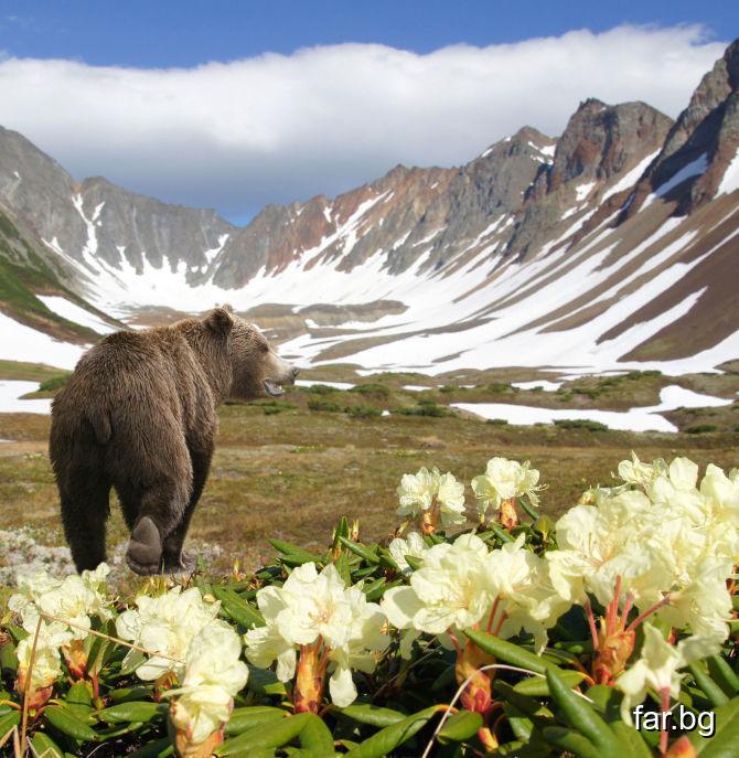Ще приведа един пример из българския живот, от кой