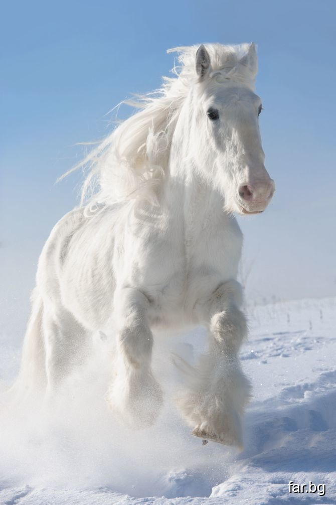 Конят представлява човек, който кара своите мисли,